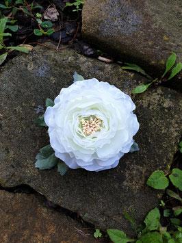 weiße Ranunkelblüte