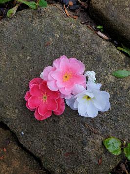 Bogenformorm Blüte