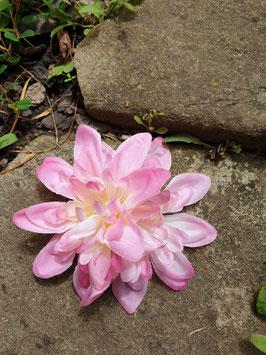 Pinke Doppelblüte