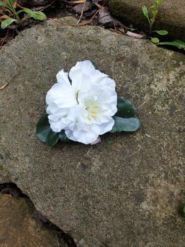 Kleine weiße Blüten