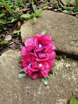 Hortensien Haarblüte pink