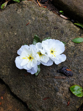 zarter länglicher Blütenclip