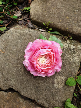 Rosa Ranunkelblüte mit Blatt