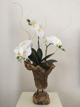 Toronto Orchid