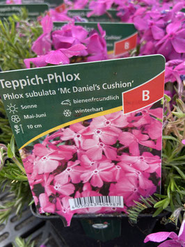 Teppich- Phlox ´Mc Daniels Cushion´