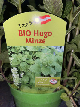 BIO Hugo Minze