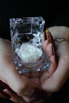 Diamond Rose        (white)