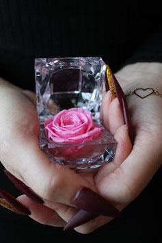 Diamond Rose (lightpink)