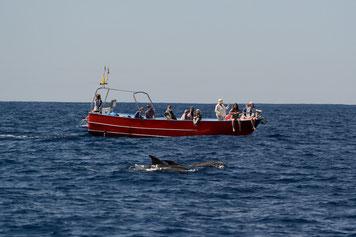 Delfine vor den Kanarischen Inseln