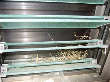 スズメの巣?…20100612