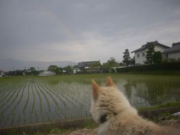 あっ虹だね(*^_^*)