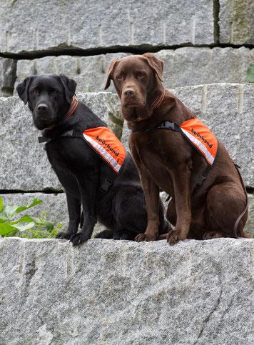 Spürhunde Keno (r) und Yuma (l)  Foto: Marlen Tinner