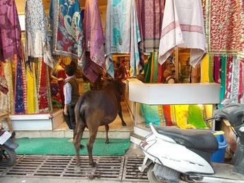 服屋に牛がいるのもわりと普通。