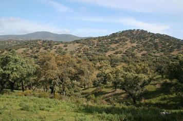 Blick auf das weitläufige Gelände der Fundacion Monte Mediteraneo