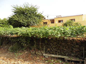 Grundstück und Haus