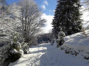 Winterwanderwege direkt vom modernen Wellnesshotel, strahlungsarme Zimmer für elektrosensible