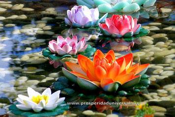 VIVIR EN PLENITUD ES DECIDIRTE POR LA FELICIDAD - PROSPERIDAD UNIVERSAL- vida plena de abundancia absoluta.