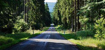 Rechts und links nur Wald