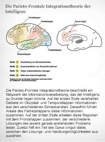 Die Parieto-Frontale Integrationstheorie: Das Netzwerk der Intelligenz. Grafikerin: Meike Ufer