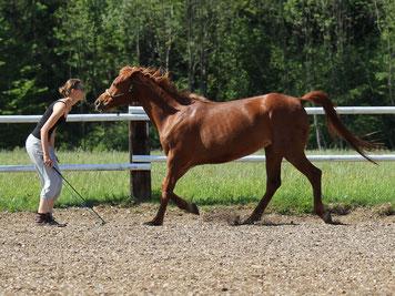 Ein Pferd läuft im Galopp auf Natascha Leiler zu