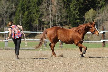 Ein Pferd wird von Natascha Leiler longiert
