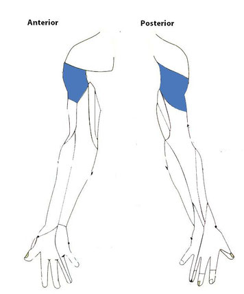 sensory function of the axillary nerve