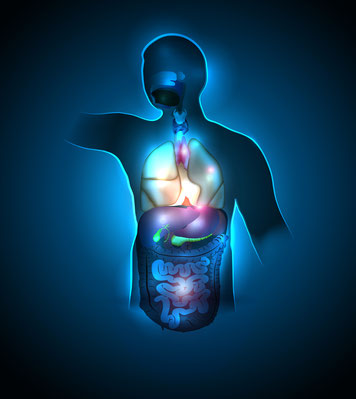 ein gesundes Organsystem