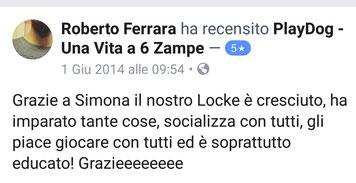 Locke (meticcio 3 mesi)