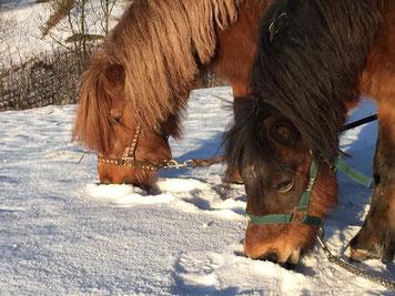 Pferde Schnee Weihnachten Fiedlers Drachenhof