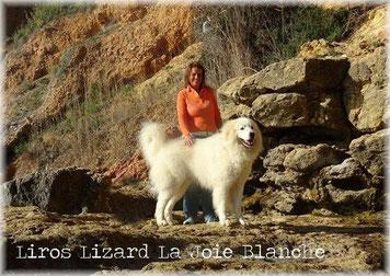 Bella estampa de Liros Lizard de la Joie Blanche