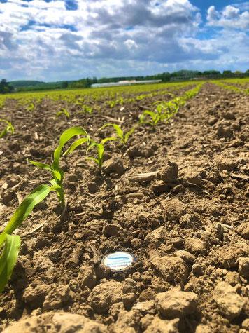 agronomie, irrigation, eau, economie eau, humidité sol