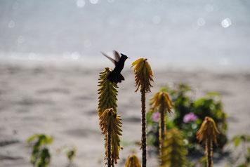 ein kleiner Kolibri