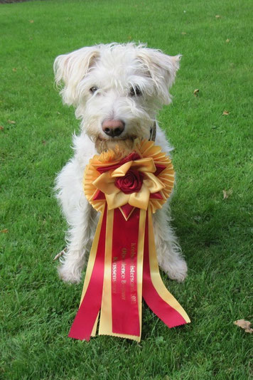 Christo ist Kreismeister 2015 Obedience Beginner