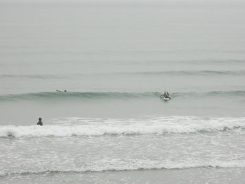 昨日です。南西ウネリで風はほとんど無く弱い北東、面ツルでした。