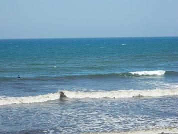 沖と手前の色がくっきり(ー_ー)!! 今日も藻とゴミが凄かった・・