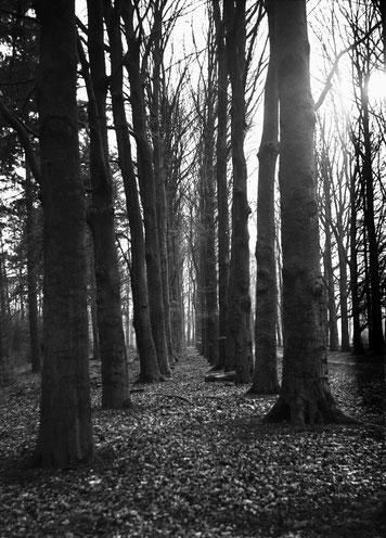 portaal van mijn analoge kunst fotografie, zowel in kleur als zwart/wit. bomenrij als pad.