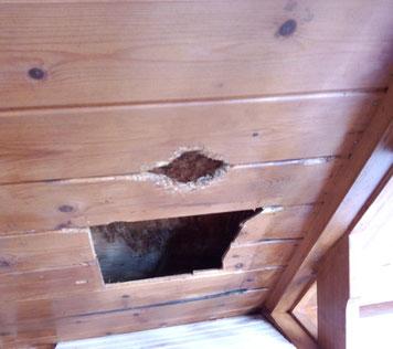 キツツキに開けらた穴の補修
