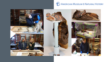 Präsentationsseite: Konservierung & Restaurierung am AMNH, New York | © Diana Gabler