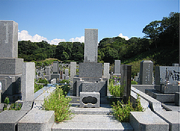 三浦霊園,草抜き