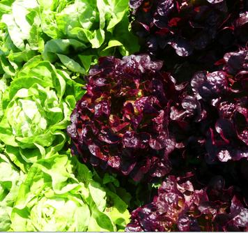 Der regionale Bio-Gemüseanbau fördert die Diversität der Flora und Fauna.