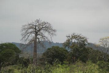 traversée du parc national Machalilla