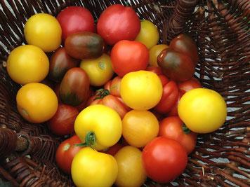 sonnengewärmte Tomaten in allen Variationen