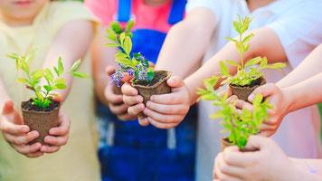 Tipps gegen den Corona-Koller: Pflanzen aussäen