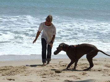 Ferien mit Hund an der Küste
