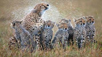 Ghepardi - Kenya Vacanze