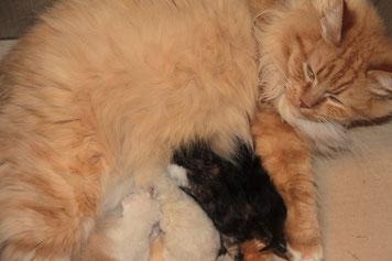 Mamma Laryssa e i suoi cuccioli