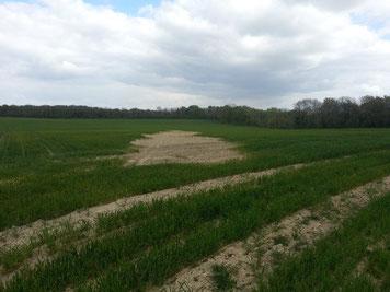 Partie contaminée du terrain (près du village d'Allemant)