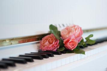 Bild: Rosen auf weißer Klaviertastatur