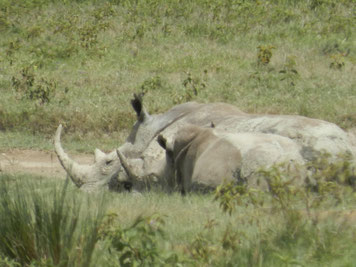 Eine Kenia Reise zu zwei Nationalparks, Tsavo Ost und Tsavo West