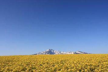 鳥海高原菜の花まつり